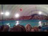 Белый кит катает на себе, прыжки дельфинов